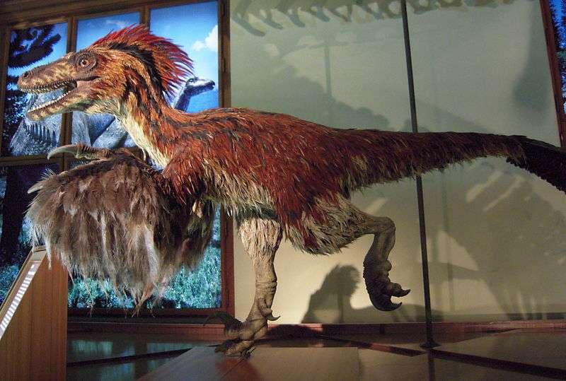 Le Deinonychus était un dinosaure à plumes qui chassait en bande au début du Crétacé, et qui a donné son nom au clade des déinonychosaures. © Domser, Wikipédia, DP