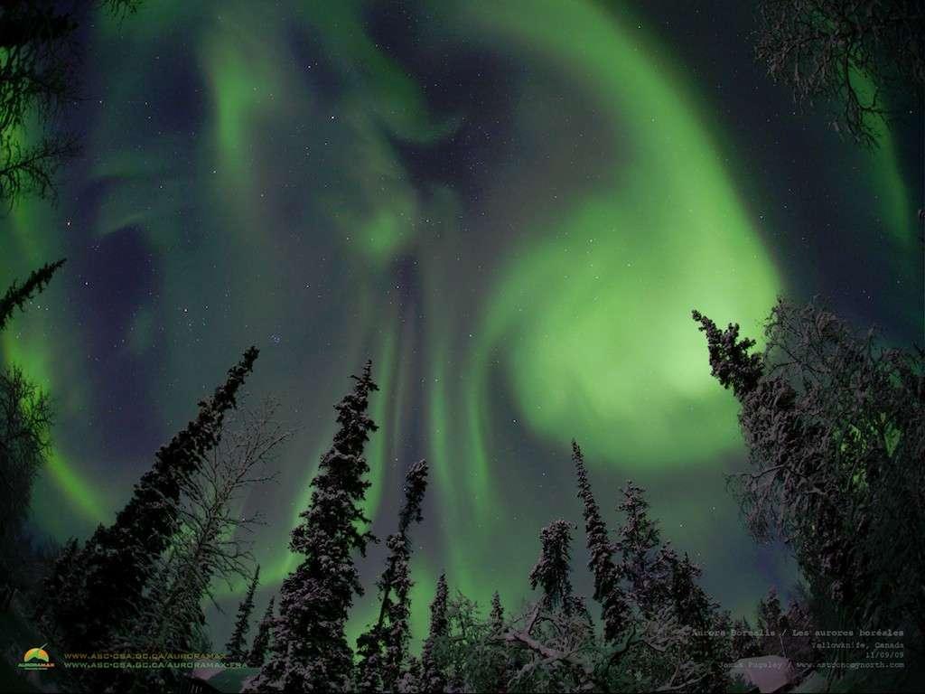 Cette très belle aurore boréale est proposée comme fond d'écran sur le site de l'Agence Spatiale Canadienne. Crédit AuroraMax
