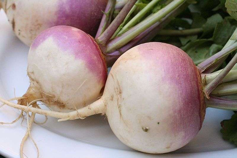 Le navet est un légume dont on consomme la racine. © Wikimedia Commons