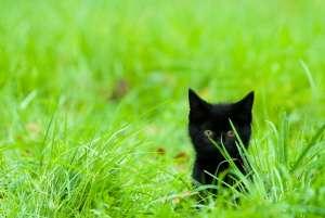Bientôt, ce petit chat mangera du poisson durable. © Eric Gevaert
