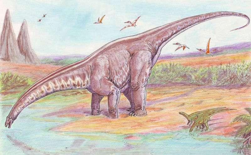 Représentation moderne d'un apatosaure. L'espèce modèle pour laquelle les émissions annuelles de méthane ont été calculées, Apatosaurus louisæ, a vécu il y a 154 à 150 millions d'années, durant le Jurassique supérieur. © Wikimedia common, DP