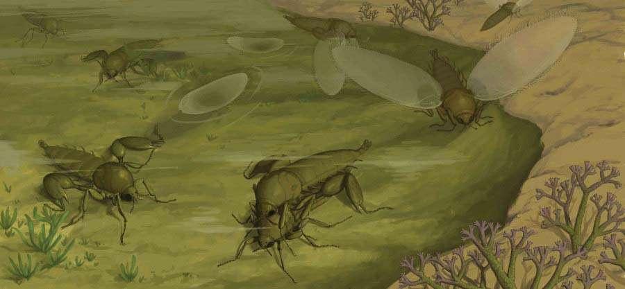Reconstitution écologique des Strashila daohugouensis à l'époque du Jurassique moyen de Daohugou, en Chine. Il s'agirait des premiers diptères à s'être différenciés. © Huang Diying