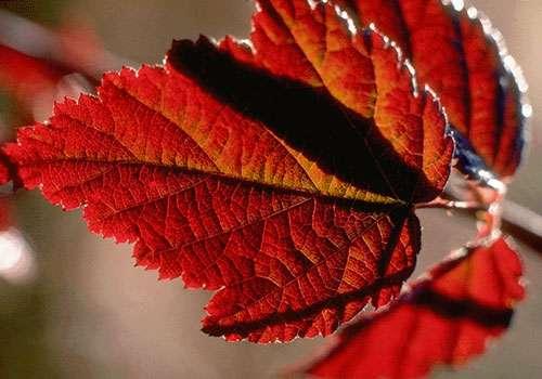 Partagez avec vos amis les couleurs de l'automne…