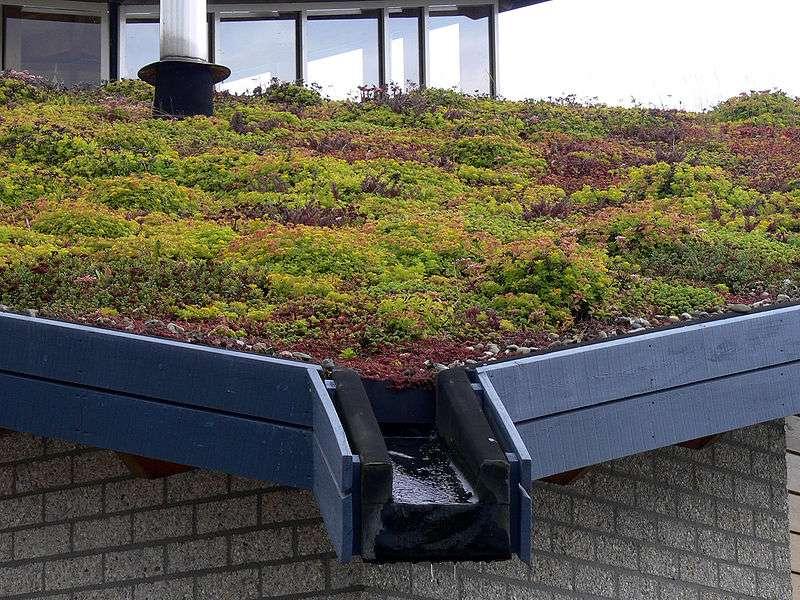 Cette toiture végétale composée de mousses, de sédums et d'autres plantes ralentit l'écoulement des eaux de pluie, épure les eaux pluviales et augmente la perméabilité de la ville à la flore et à la faune. © Lamiot, Wikimédia CC by-sa 3.0