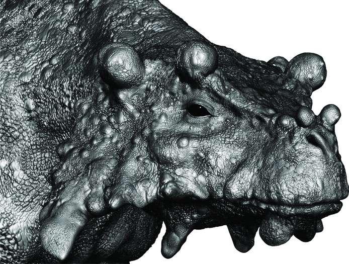 À partir des trois crânes trouvés au nord du Niger, Marc Boulay a su restituer l'apparence probable du reptile Bunostegos akokanensis. Ce pareiasaure a vécu voilà plus de 250 millions d'années. © Tsuji et al., Journal of Vertebrate Paleontology, 2013