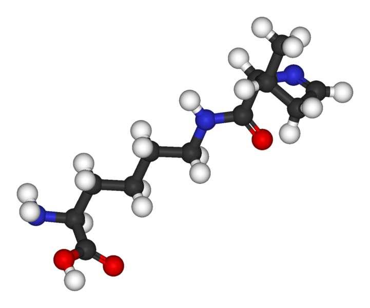 La pyrrolysine est un acide aminé rare, incorporé en face d'un codon stop. © Domaine public