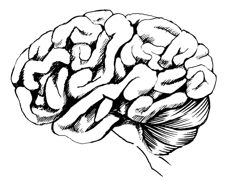 L'encéphale se compose de 3 parties. La plus connue est le cerveau, la principale, qu'on retrouve en avant. Juste derrière, en bas, on trouve le cervelet. Et entre le cerveau et la moelle épinière, on trouve le tronc cérébral. © Fotolia