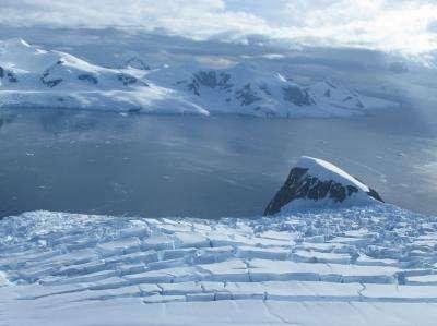 La baie Andvord, dans la péninsule Antarctique, abrite une faune benthique exceptionnelle. Si elle se trouve au pied de glaciers, l'eau n'est pas turbide, et accueille krill, méduses, concombres de mer, méduses et vers en tout genre. © Craig Smith, université d'Hawaï