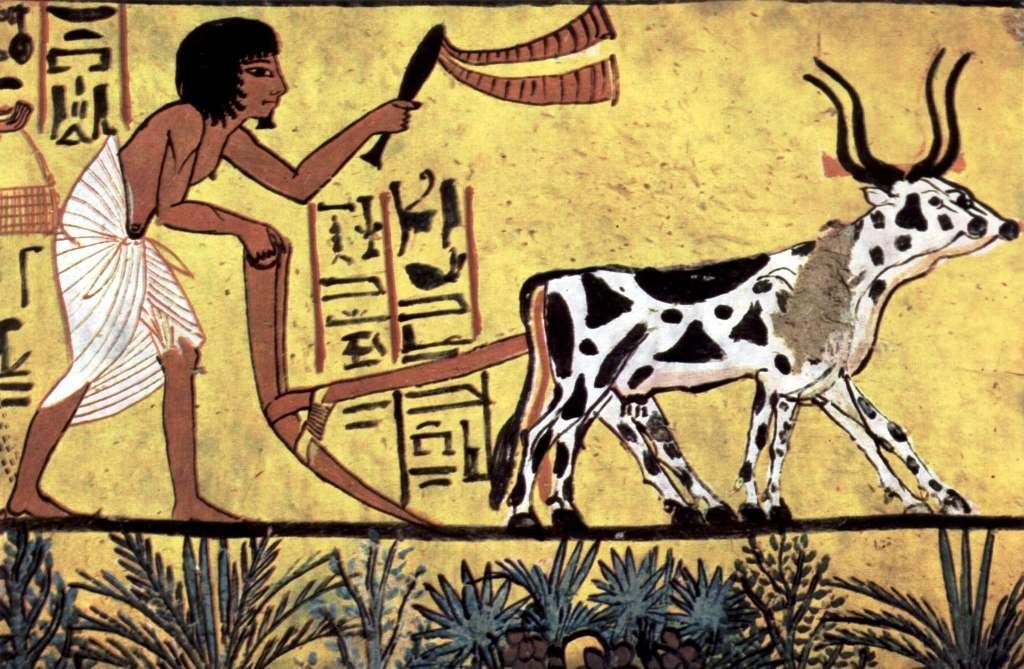 Sennedjem, « le frère est doux », était un artisan maçon qui a vécu sous le règne de Séthi 1er (-1294 à -1279) et au début de celui de Ramsès II (-1279 à -1213). Il était chargé de la construction et de la décoration des tombes royales de la Vallée des Rois. Sa propre tombe ornée de superbes fresques dont celle-ci montrant une scène d'agriculture, est célèbre. © Wikipédia, DP