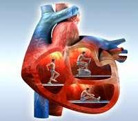 Découvrez le fonctionnement complet du cœur. © Wellcome Images, Flickr CC by nc-nd 2.0