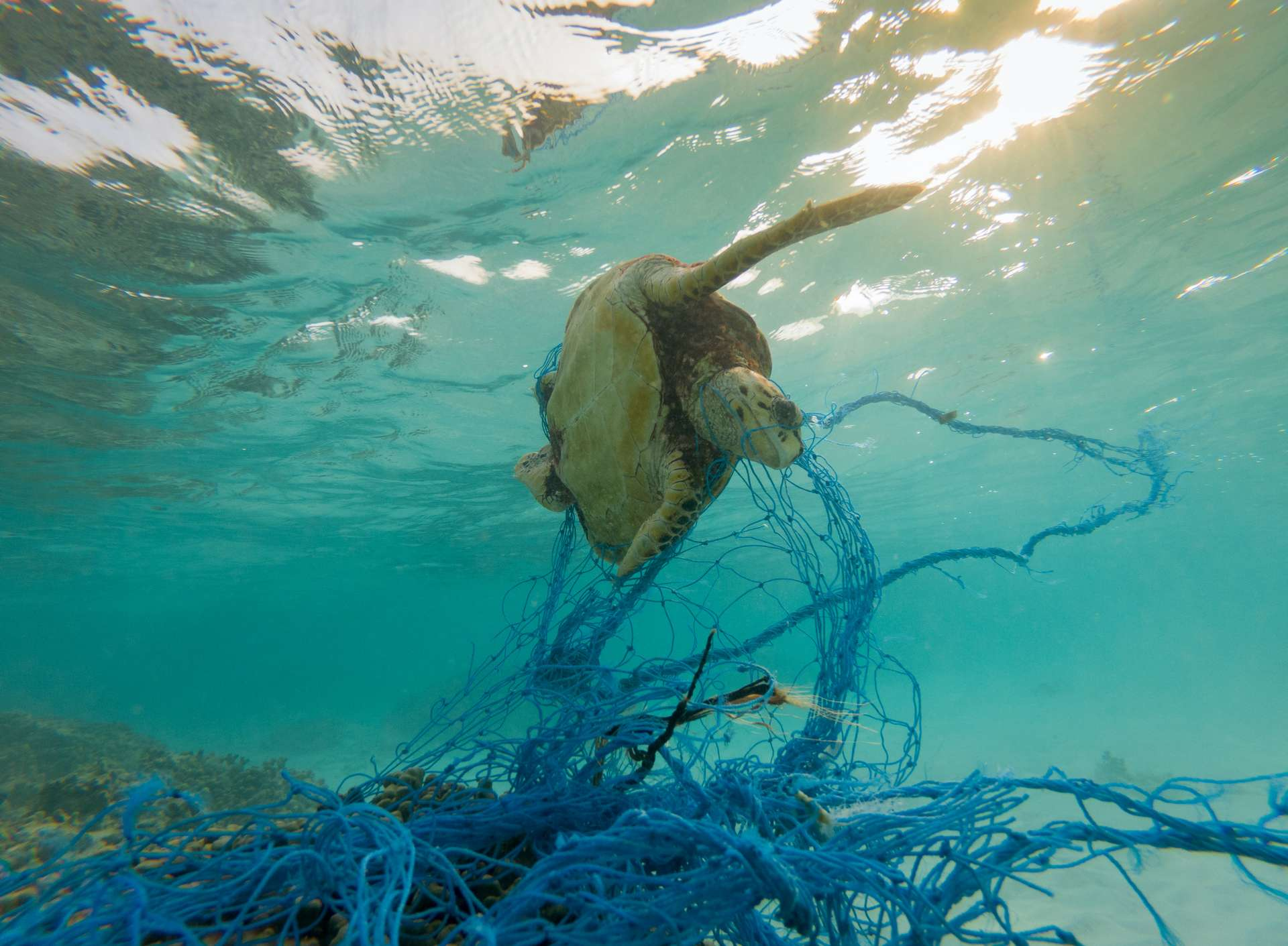 Les filets de pêche abandonnés constituent des pièges mortels pour les animaux marins. © aryfahmed, Adobe Stock