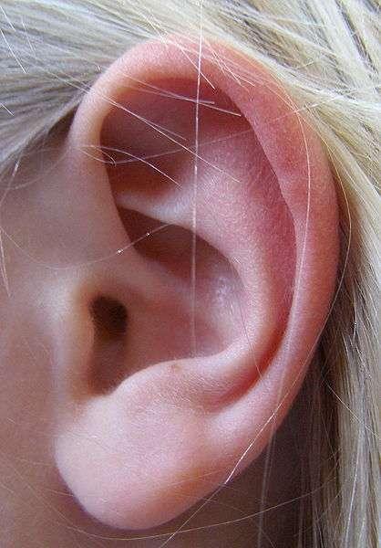 L'oreille externe constitue la partie la plus visible de l'oreille. © DR