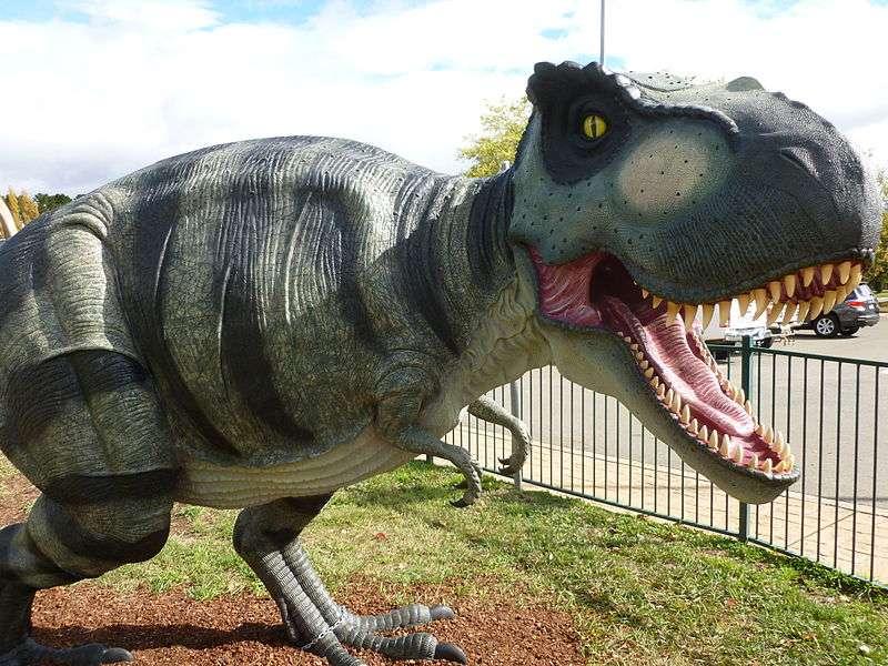 Les tyrannosaures avaient des bras minuscules en comparaison du reste de leur corps. Si petits qu'on se demande bien à quoi ils pouvaient leur servir. Peut-être même pas à manger. © NationalDinosaurMuseum, Wikipédia, cc by sa 3.0
