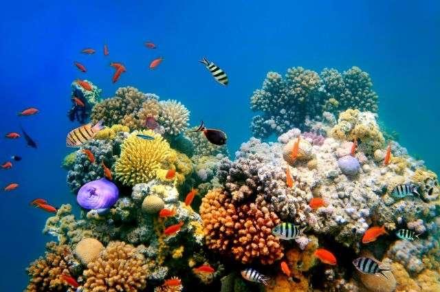Le 12th International Coral Reef Symposium se tient du 9 au 13 juillet 2012 à Cairns en Australie. Ce symposium de grande ampleur, avec 2.600 participants et plus de 1.500 communications présentées, se déroule tous les 4 ans. L'un des objectifs de cet événement est de faciliter le dialogue entre les chercheurs, les gestionnaires de récifs et les autorités. © Vlad61/shutterstock.com
