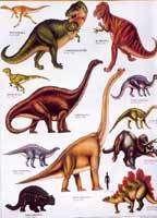 Les dinosaures auraient disparu par une extinction de masse
