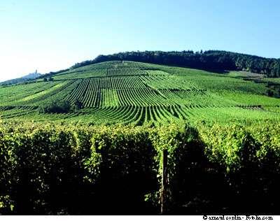 Un peu de vin rouge, c'est bon pour la santé... © Arnaud Cordin/Fotolia