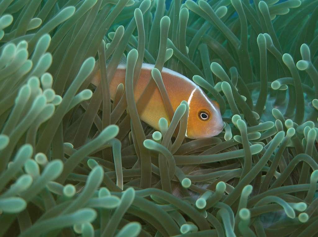 Les océans couvriraient 70,7 % de la surface de la Terre. Ils représentent un volume habitable 300 fois plus important que celui des milieux terrestres. Ils accueilleraient pourtant dix fois moins d'espèces. © NOAA, Flickr, cc by 2.0