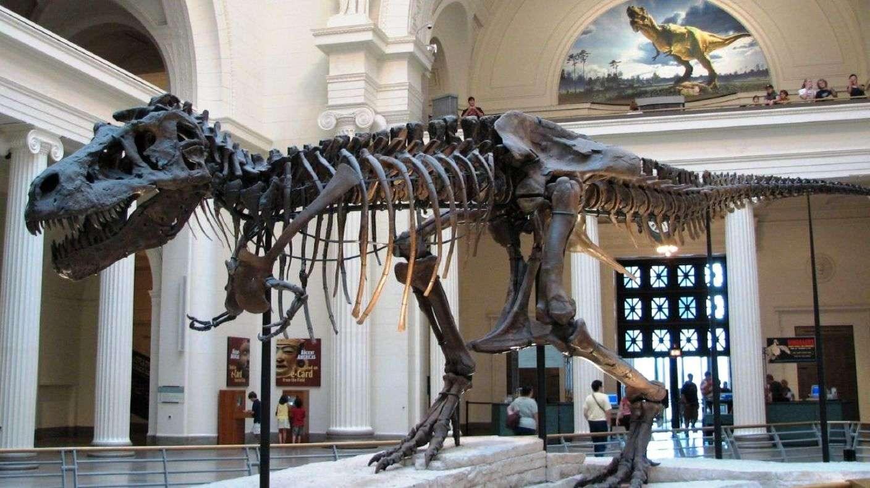 Sue, le T-rex du musée de Chicago, l'un des plus grands carnassiers de tous les temps. © Steve Richmond, Wikimedia Commons, cc by 2.0