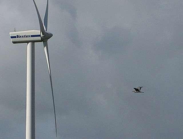 Selon une étude de la LPO réalisée en 2007, chaque éolienne française tuerait entre 0 et 40 oiseaux ou chauves-souris par an. © Southgeist, Flickr, CC by-sa 2.0