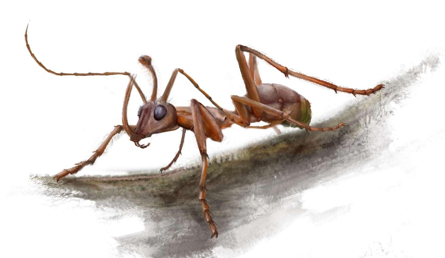 Reconstitution de Ceratomyrmex ellenbergeri basée sur les fossiles exceptionnellement préservés découverts dans l'ambre crétacé du Myanmar. © V. Perrichot