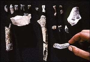 Ossements provenant d'Ardipithecus kadabba