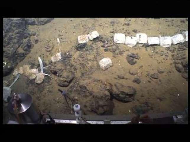 Un squelette de baleine découvert en Antarctique... avec son écosystème