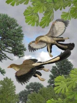 Représentation artistique d'un Archeopteryx lithographica en vol selon Carl Buel. L'animal pourrait s'être élancé d'un arbre pour ensuite se mettre à planer. © Carl Buel