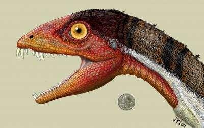 Un dinosaure dont les dents frontales sont longues et de travers a été découvert sur un site paléontologique du Nouveau-Mexique. © Jeffrey Martz