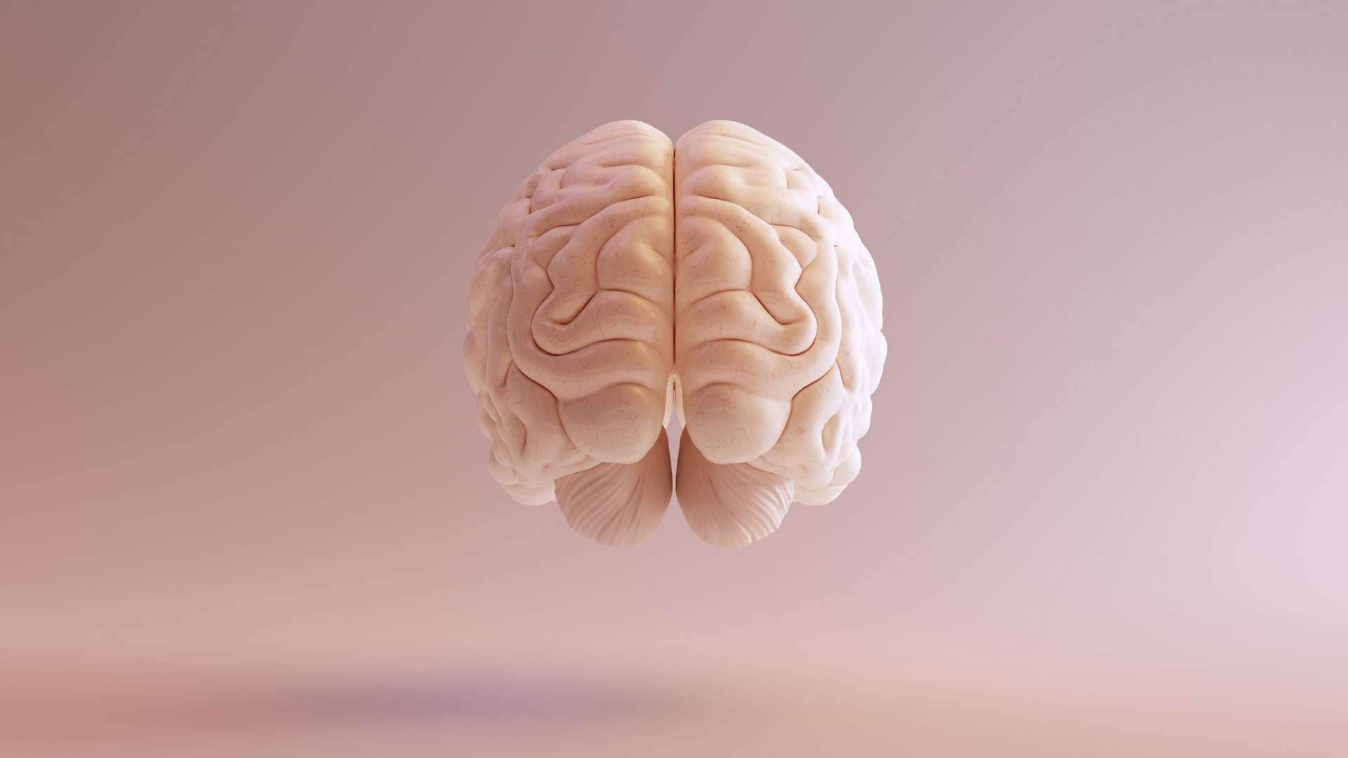 Pour leurs analyses, les chercheurs ont usé de deux outils. Une technologie qui leur a permis de détecter la substance blanche dans le cerveau, afin de reconstruire le réseau neuronal – neurones, axones, synapses. Et une solution mathématique, la théorie des réseaux, pour créer et appliquer une jauge uniforme de conductivité cérébrale. © Paul, Adobe Stock