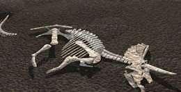 """Découvrir des fossiles de dinosaures : prochain """"sport"""" scientifique à la mode ?"""