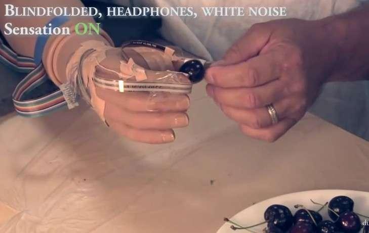 La prothèse de main équipée de l'interface neuronale développée par l'équipe du professeur Dustin Tyler de l'université Case Western Reserve. Des capteurs de force sont placés à l'extrémité des doigts et reliés à des électrodes implantées dans l'avant-bras du patient et positionnées sur les trois principaux nerfs. Un boîtier électronique externe se charge de convertir en stimuli électriques les informations provenant des capteurs. Sur cette image, on voit comment la personne, dont les yeux et les oreilles sont occultés, parvient à saisir une cerise entre son pouce et son index artificiels sans l'écraser. © Functional Neural Interfaces, université Case Western Reserve