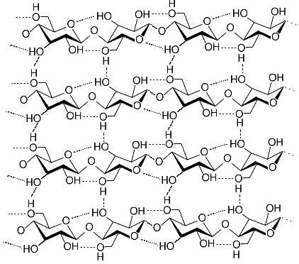 Macromolécule de cellulose, holoside. © Luca Laghi, Wikimedia CC by-sa 3.0