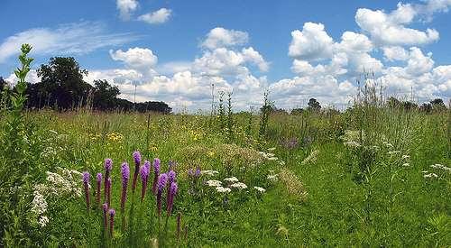 Les prairies, comme les forêts, stockent une partie du CO2 dans les sols. © T. Lindenbaum CC by-nd