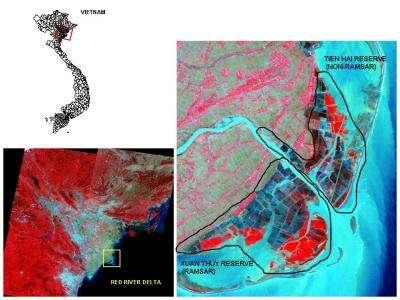 Delta de la Rivière rouge, Vitenam. Sur l'image de droite, on remarque que les exploitations aquacoles dans la réserve gérée selon la convention Ramsar (zone cerclée en bas) sont plus étendues que dans la zone non protégée (en haut). © Karen Seto, Stanfor