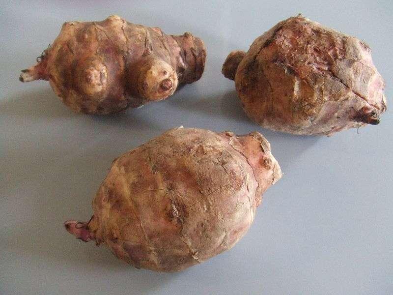 Le topinambour est un légume tuberculeux. © DR