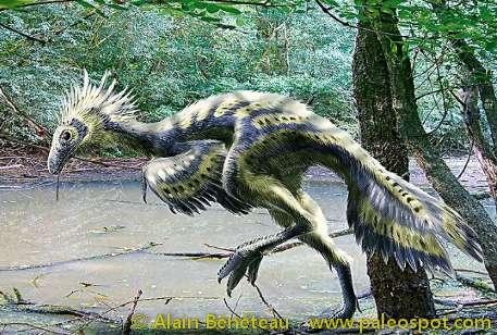 Reconstitution d'un Caudipteryx avec des couleurs de plumage hypothétiques. Ce dinosaure pouvait mesurer jusqu'à deux mètres de long, atteindre 60 cm de haut et peser 15 kg. © Alain Bénéteau