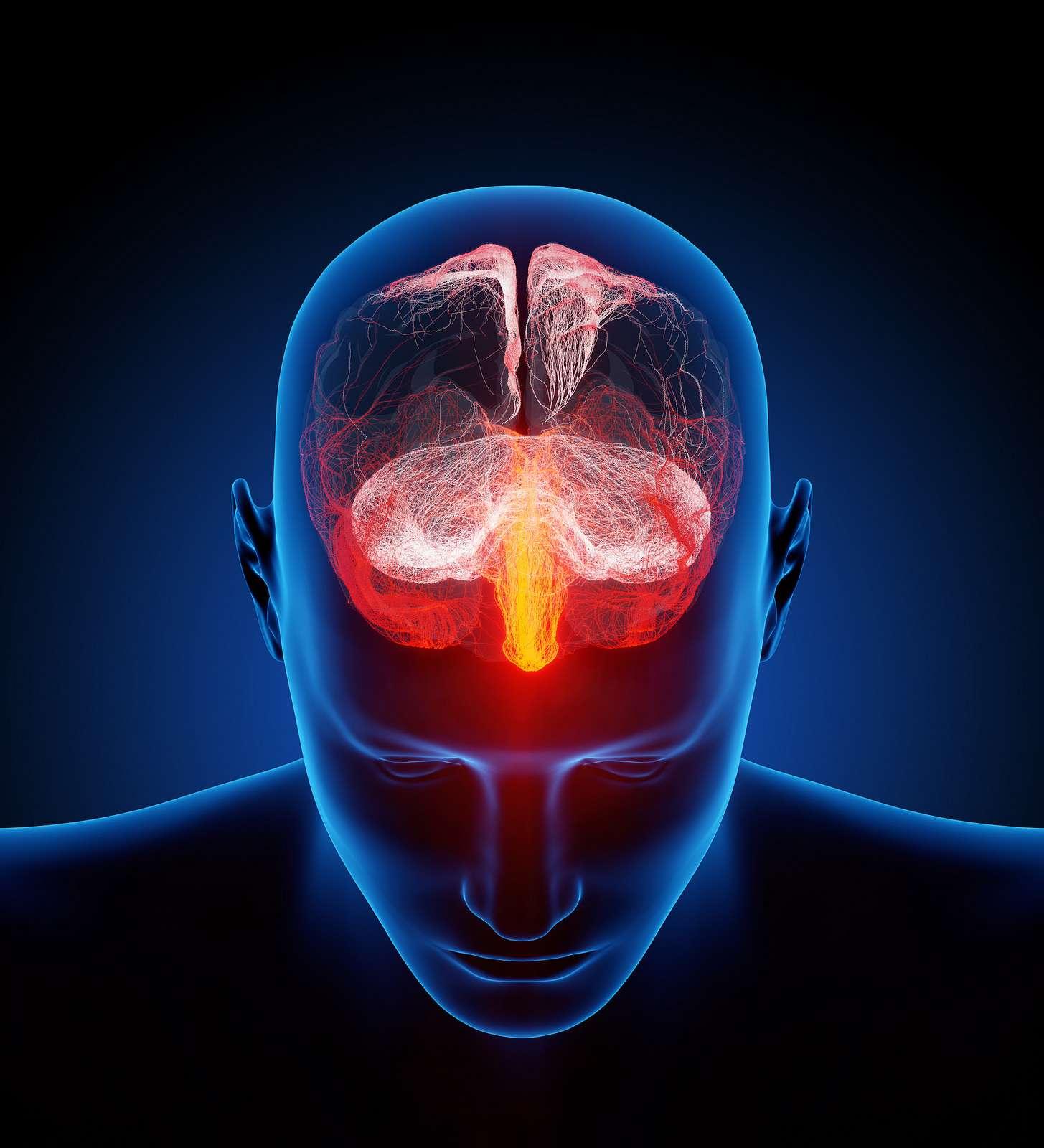 Les maladies neurologiques peuvent toucher le système nerveux central (encéphale et moelle épinière). © Ars Electronica, Flickr, CC by-nc-nd 2.0