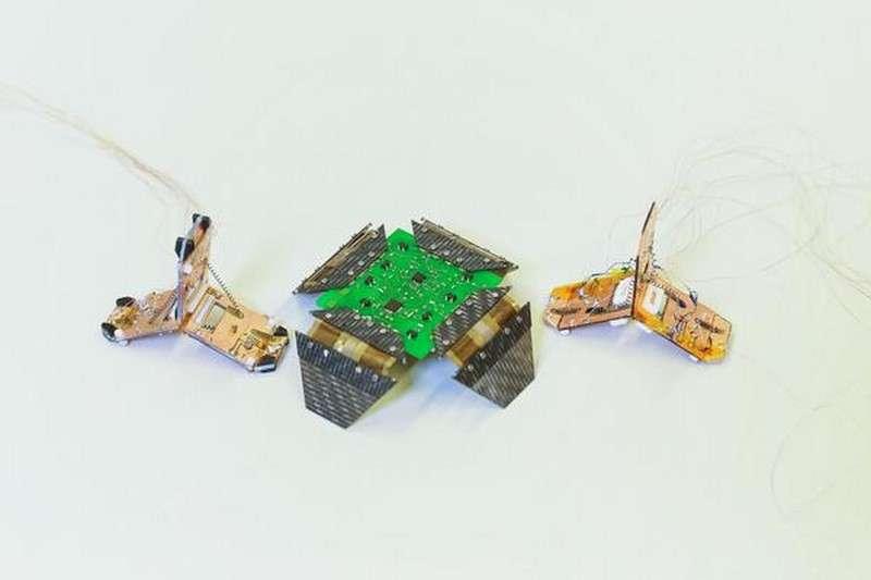 Les deux « robogamis » créés par l'École polytechnique fédérale de Lausanne. Au centre, un modèle à quatre pattes qui peut ramper et se replier sur lui-même. Il est entouré par deux Tribot, le dernier-né du laboratoire de robotique reconfigurable. © Alain Herzog