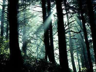 Les forêts contribuent à la conservation de la biodiversité, à la fourniture d'eau propre et au soutien des moyens d'existence.