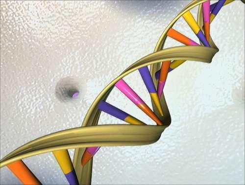 La mutagénèse saturante consiste à réaliser toutes les mutations possibles d'un gène. Le génome humain comporte environ 22.000 gènes et un peu plus de 3 milliards de paires de bases. © Aleiex, Flickr, cc by nc sa 2.0