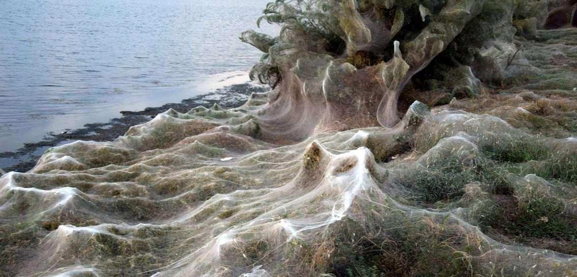 Une toile géante de 1.000 m de long a recouvert les abords d'un lac en Grèce. Au mois de septembre, une autre toile plus petite, de 300 m de long, avait également envahi la ville d'Aitoliko. © Giannis Giannakopoulos, Facebook