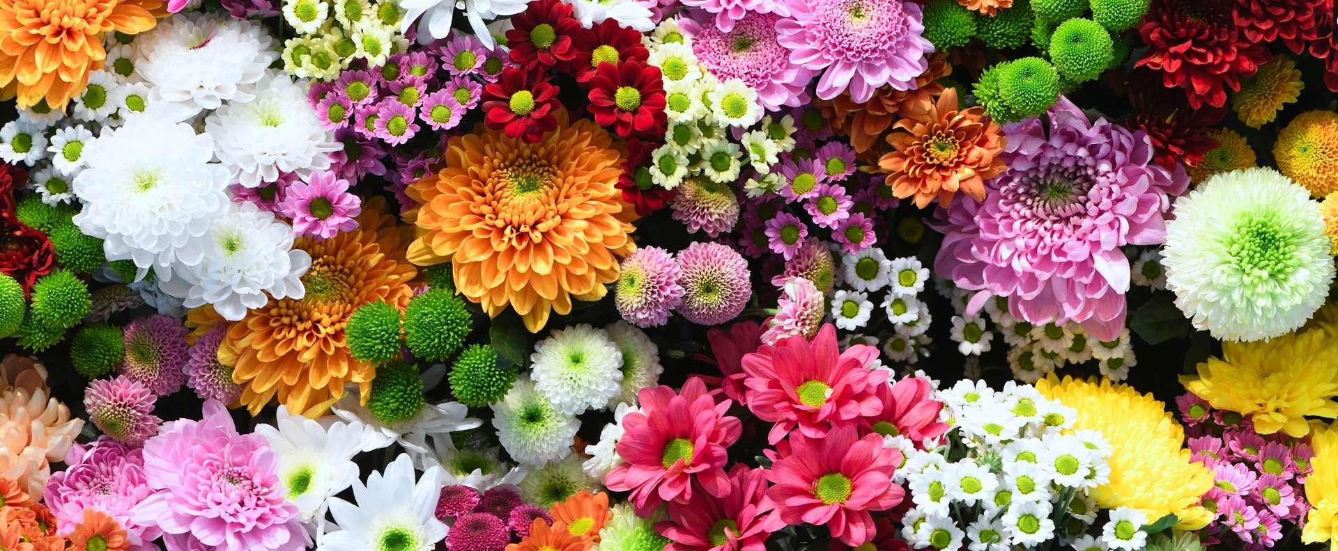 La floraison dépend de la température. Ce lien serait dû à la protéine ELF3. © Basicmoments, Adobe Stock