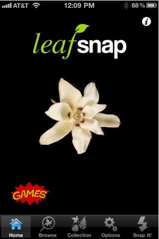Leafsnap, pour reconnaître les espèces de plantes et transmettre l'info aux botanistes. © Apple