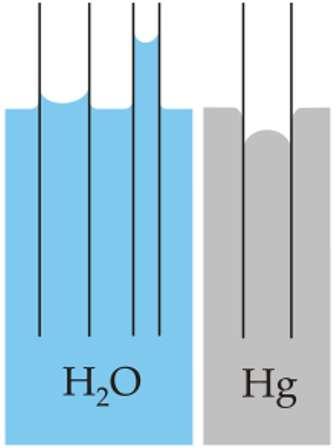 Ce schéma illustre le phénomène de capillarité et le fait qu'il dépend des liquides. Sur la gauche on voit que l'eau (H2O) monte d'autant plus haut au-dessus de la surface de ce ce liquide dans un tube qui y plongé que ce tube est fin. Avec du mercure (Hg), comme on le voit sur la droite, le liquide descend dans le tube. © Wikipédia, DP