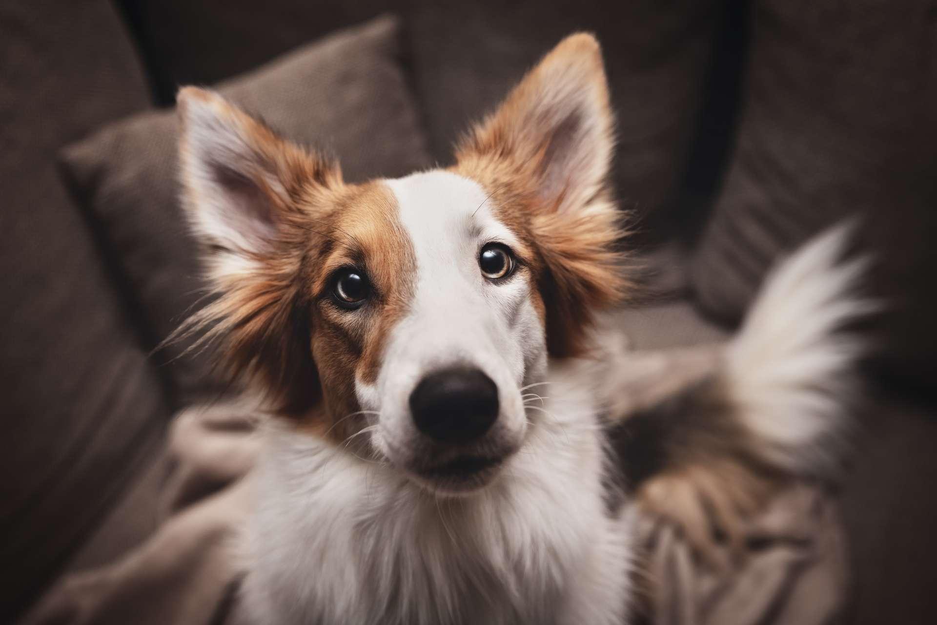 Les chiens sont un élément clé des enquêtes pour incendie criminel. © M.Dörr & M.Frommherz