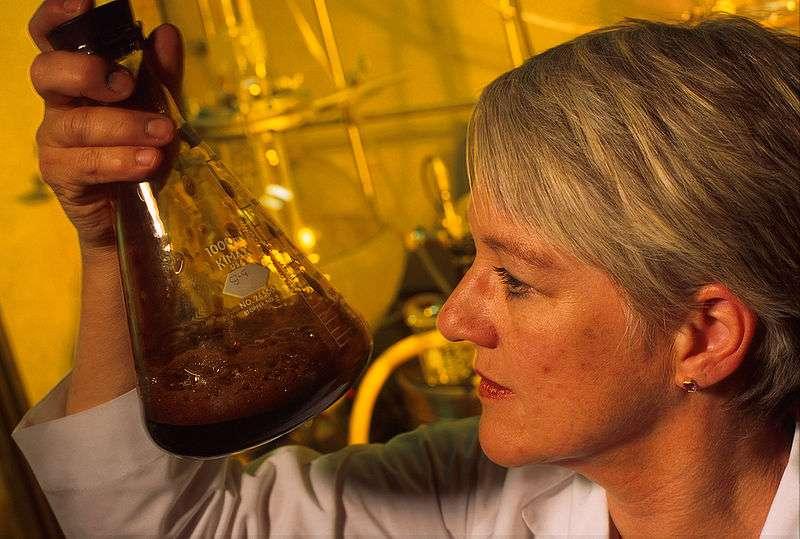 Une technicienne de Vision Paper examine un échantillon de liqueur noire. © Keith Weller / Agricultural Research Service, domaine public