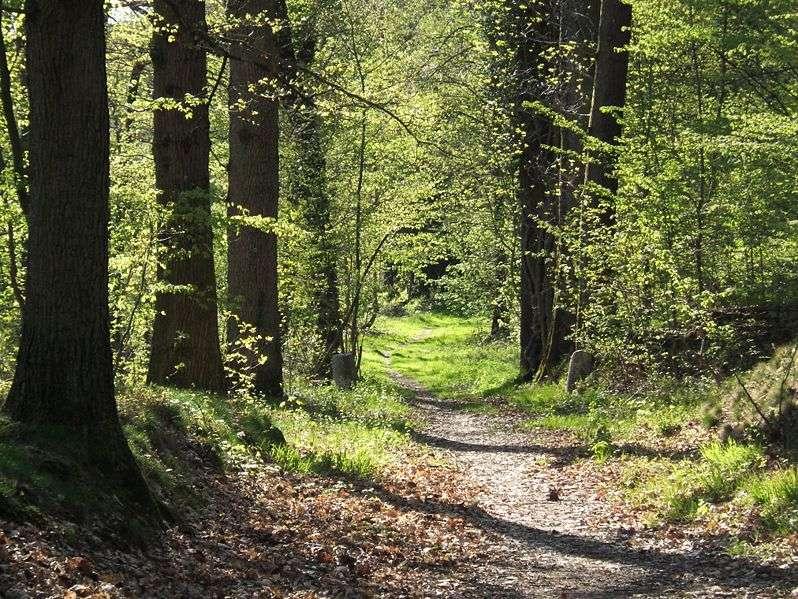 La forêt et ses arbres à feuilles caduques doivent être protégés contre la déforestation. © DR
