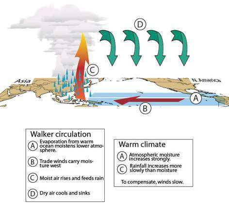 L'influence du réchauffement climatique sur la circulation de Walker(Courtesy of Nature)