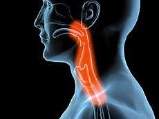 La dysphagie est d'abord un symptôme : une sensation de gêne dans la déglutition, quelque part entre la bouche et le bas de l'œsophage. Ce symptôme peut avoir plusieurs causes, lesquelles peuvent être bénignes mais sont parfois graves : un diagnostic médical doit être établi. © Thecamreport