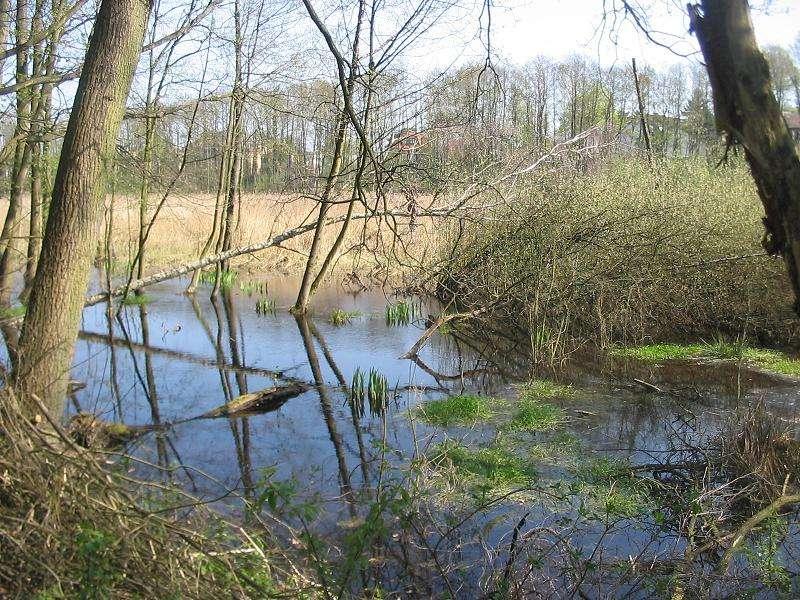 La réserve naturelle de Fließwiese Ruhleben, en Allemagne, fait partie du réseau Natura 2000 et donc du réseau écologique paneuropéen mis en place sous l'impulsion de la Convention de Berne. © Lienhard Schulz, Wikimédia CC by-sa-3.0